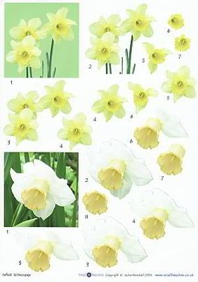 3D knipvel Daffodils DD27 Narcissen A4